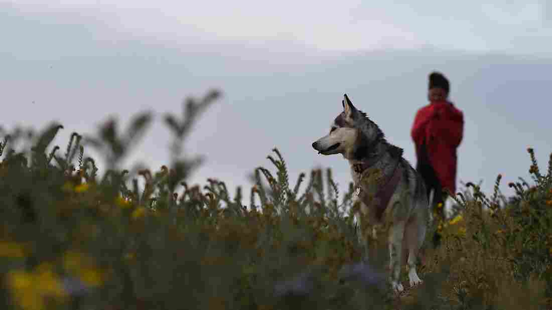 A woman walks with her dog in the Carrizo Plain National Monument near Taft, Calif., in April.