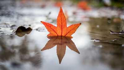 A fallen leaf reflects in a puddle in a park.