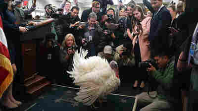 President Trump Pardons His First Turkey