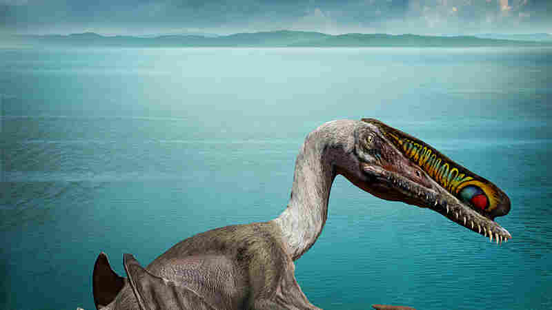 Hundreds Of Eggs From Ancient Flying Reptile Are Found In China