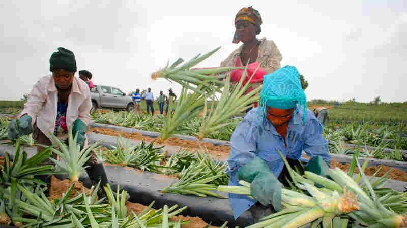 Why An Ivy League MBA Went Back To Ghana To Help A Pineapple Farm