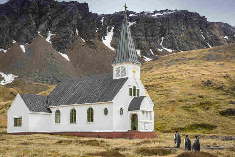 "In a photo titled ""Mom, do we always have to be the first ones at church?"" three king penguins approach the only church on South Georgia Island, near Antarctica, appearing to be headed for services."