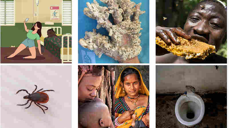 Our 10 Most Popular Global Health And Development Stories Of 2017