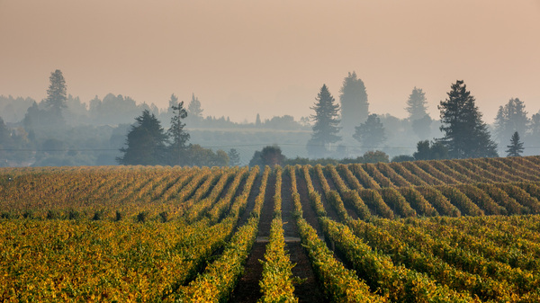 Smoke from wildfires, like this lingering cloud in Sonoma County, Calif., in October, may be responsible for creating an off taste in wine.