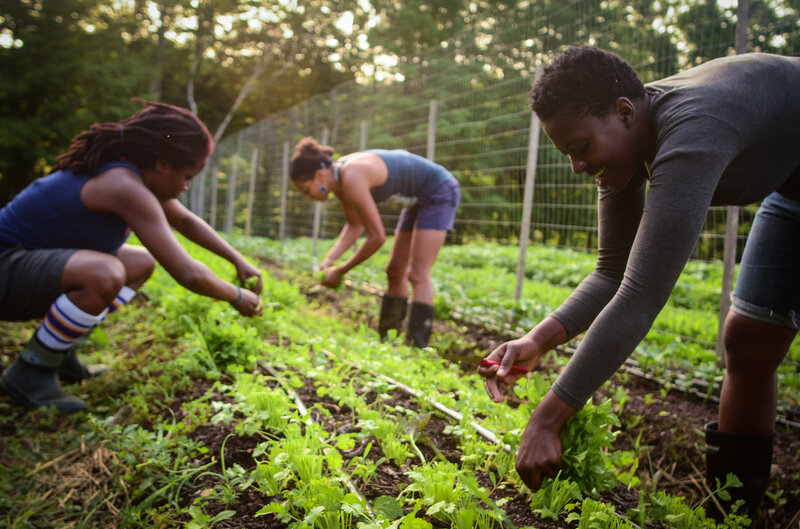 Black Farmers Are Sowing The Seeds Of Health And Empowerment : The