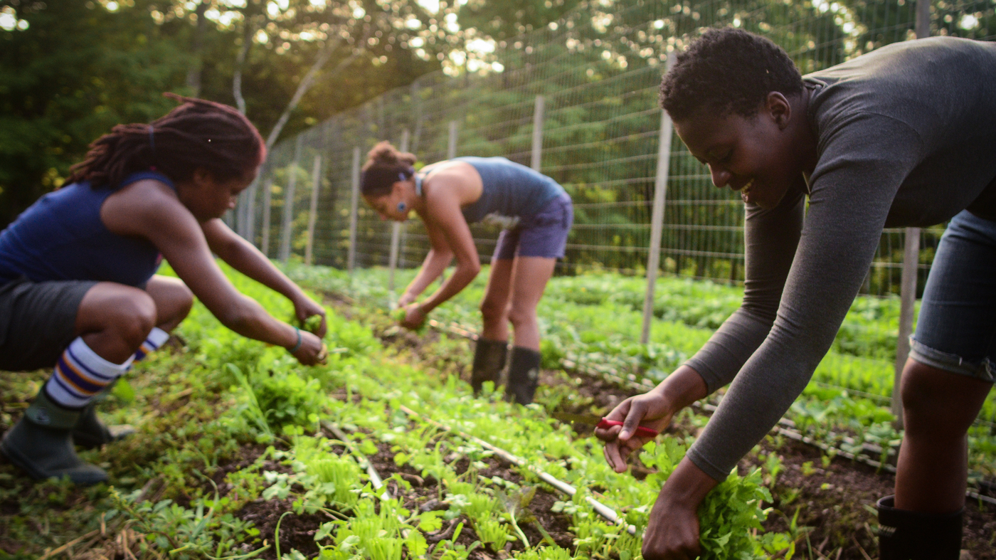 Black Farmers Are Sowing The Seeds Of Health And Empowerment The