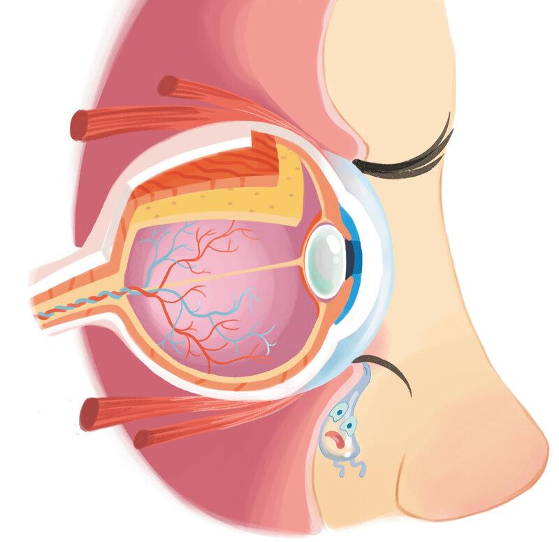 Ear Diagram Anatomy Joke - Complete Wiring Diagrams •