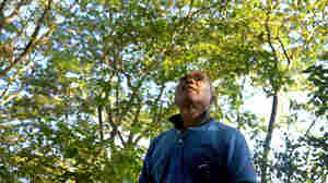 A Lifetime Of Planting Trees On A Remote River Island: Meet India's Forest Man