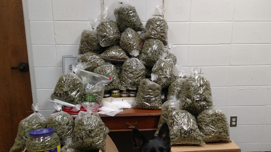 Sheriff's deputies in York County, Neb., arrested an elderly California couple who had approximately 60 pounds of marijuana in their vehicle.