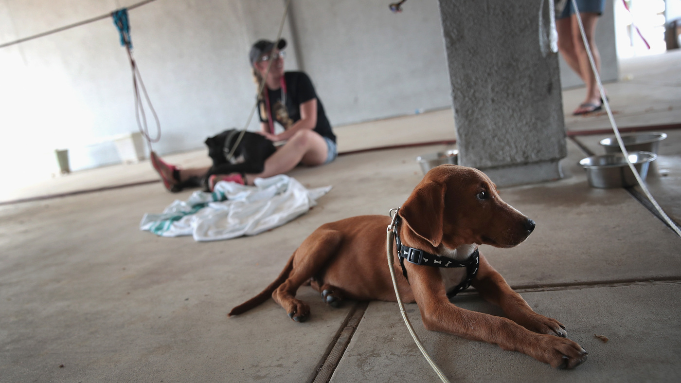 5ab51a7aa1ee No 'Easy Answer' To Growing Number Of Stray Dogs In The U.S., Advocate Says  : NPR