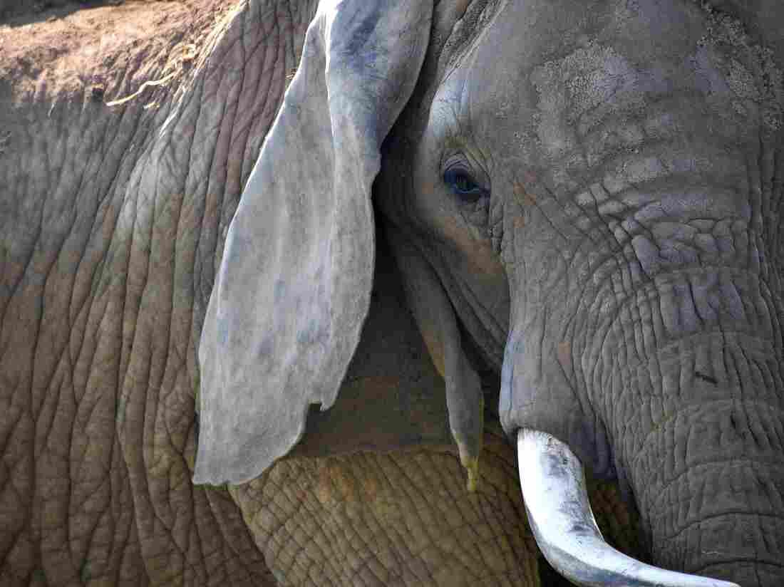 China bans ivory trade