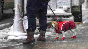 How Cold Is Too Cold For Pets?