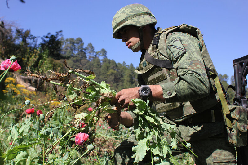 On The Hunt For Poppies In Mexico — America's Biggest Heroin