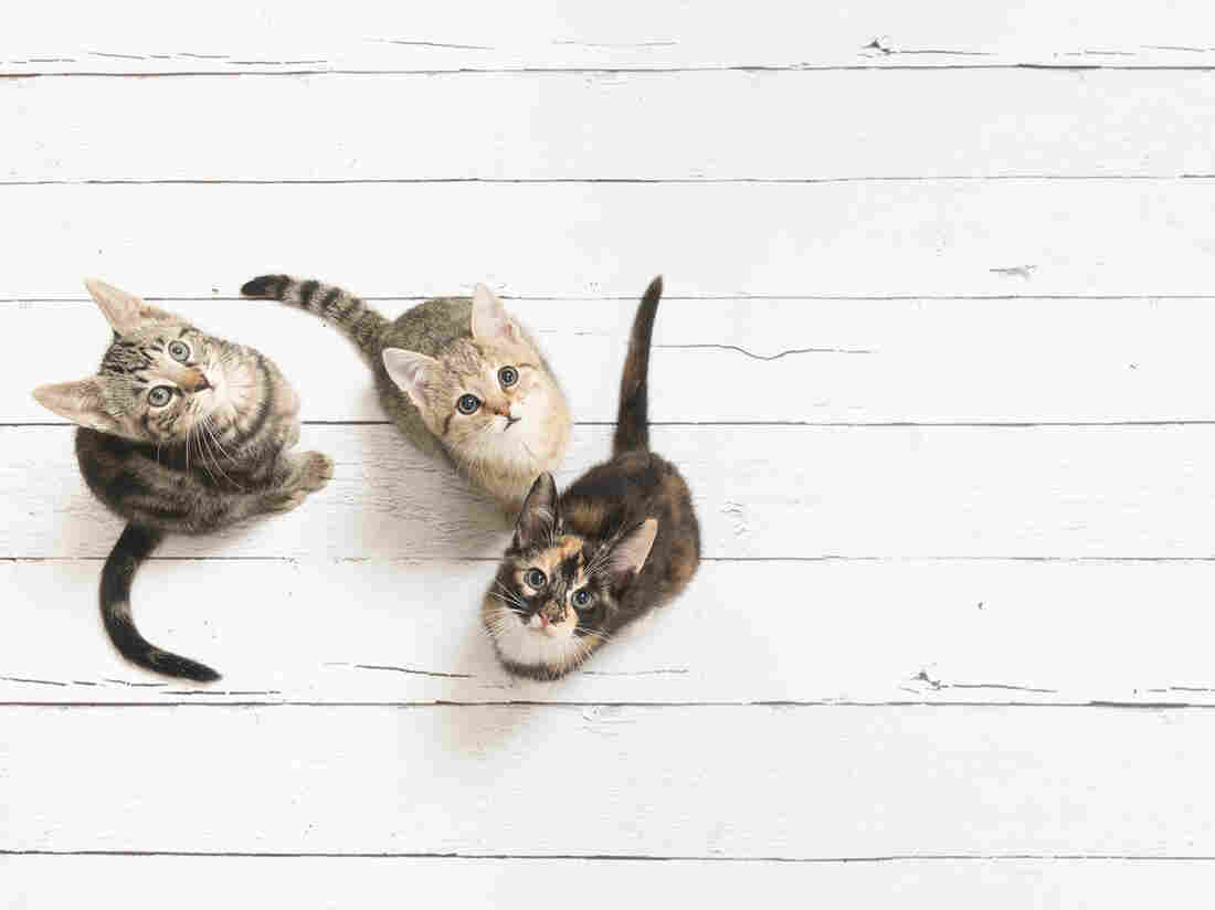 What can you learn from knowing whether your cat is right- or left-pawed?