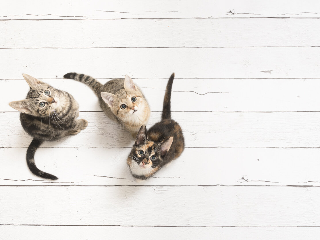 Is Your Cat Right- or Left-Pawed?