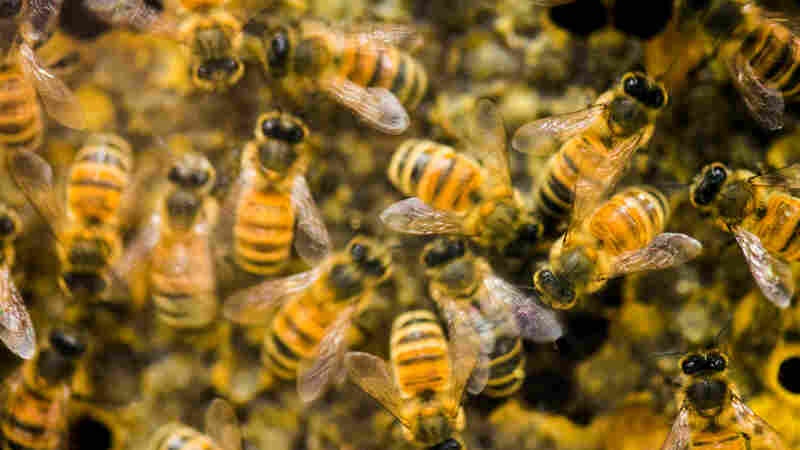 Iowa Boys Charged In Connection With Deaths Of Half A Million Honeybees