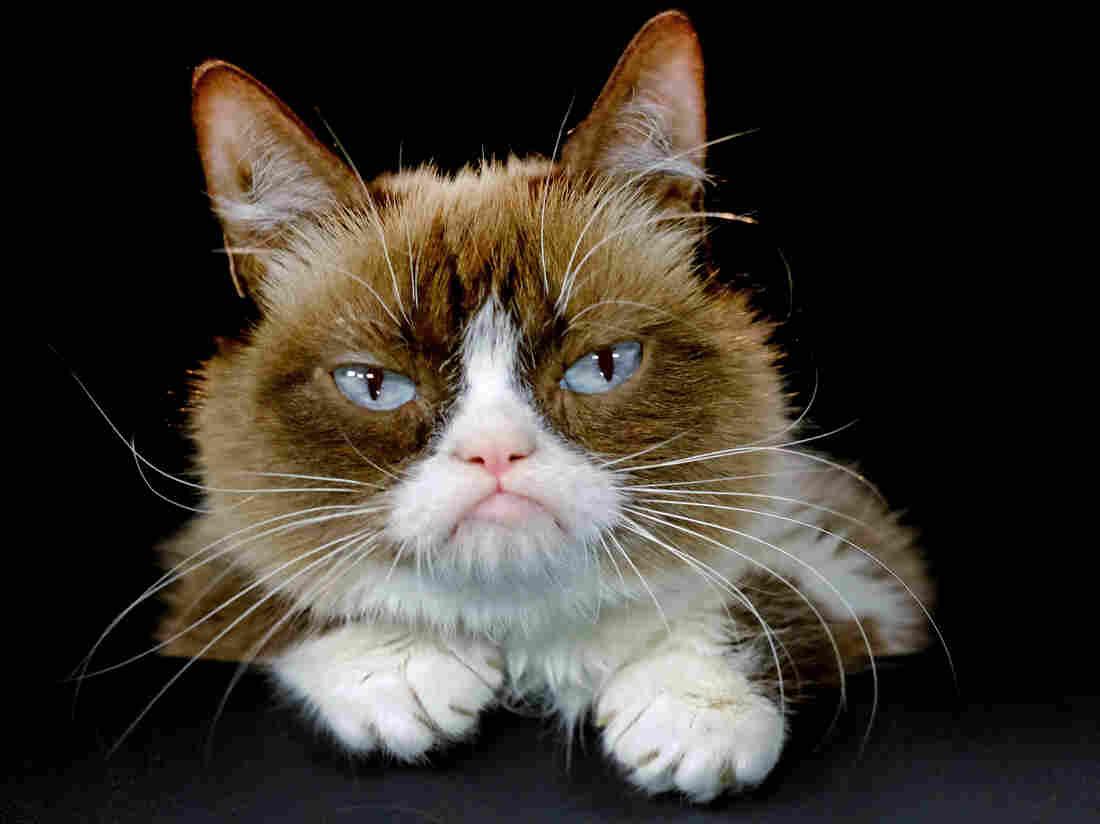 Grumpy Cat wins 710,000 in copyright lawsuit against Grenade Beverage Grumpy Cat wins 710,000 in copyright lawsuit against Grenade Beverage new picture