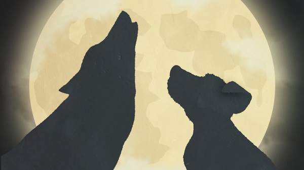 A still featuring a wolf with upright ears and a dog with drooping ears.