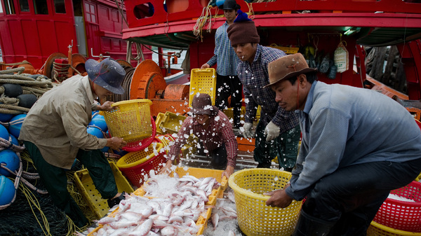 Migrant laborers sort fish as they work on a Thai fishing boat in Sattahip, Thailand