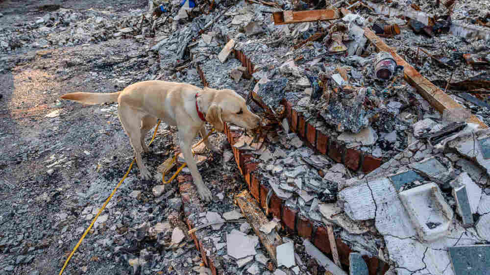 Forensic Search Dogs Sniff Out Human Ashes In Wildfire Wreckage