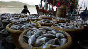 Was Your Seafood Caught With Slave Labor? New Database Helps Retailers Combat Abuse