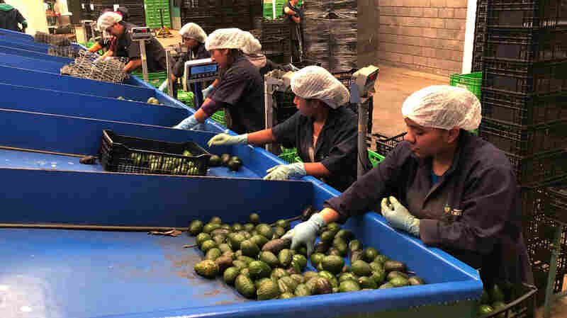 Blood Avocados No More: Mexican Farm Town Says It's Kicked Out Cartels