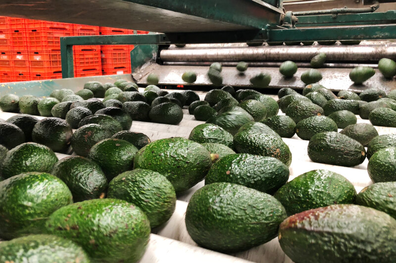 Blood Avocados No More: Mexican Farm Town Says It's Kicked