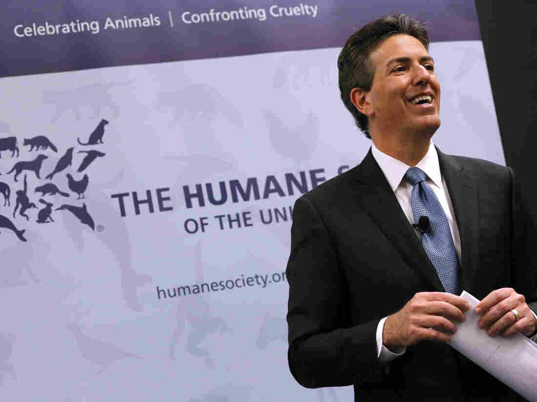 The Humane Society's CEO Has Resigned Over Sexual Harassment Allegations