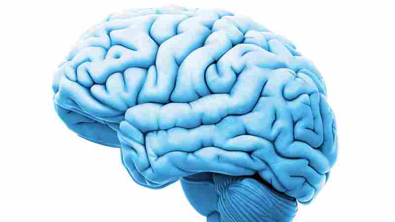 Major Neurological Conditions Have More In Common Than We Thought, Study Finds