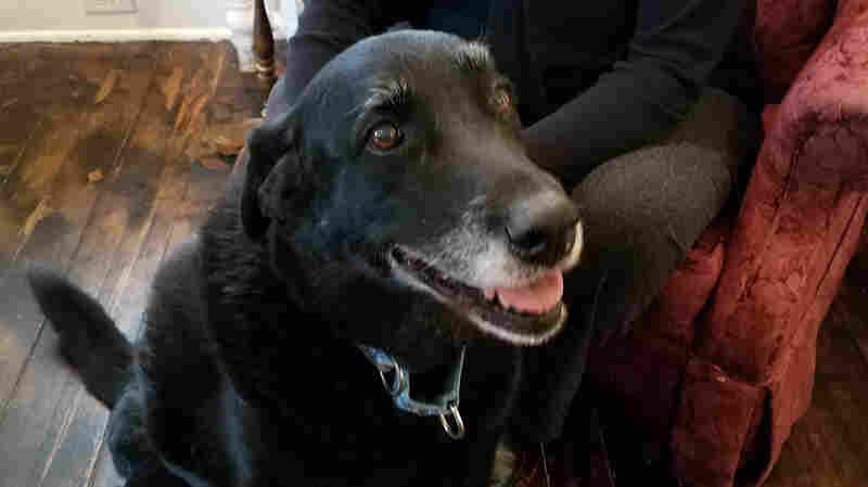 10 Years After She Went Missing, A Black Lab Is Returned To Her Owners
