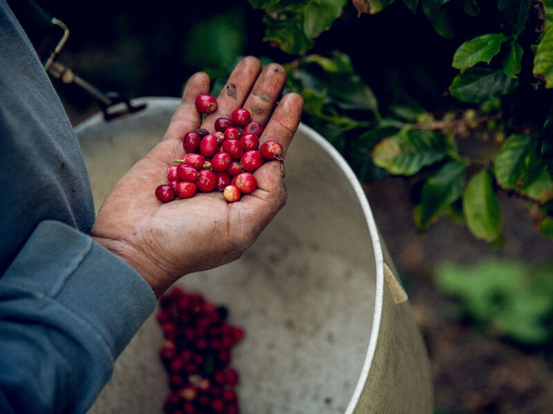 Eureka! California-Grown Coffee Is Becoming The State's Next