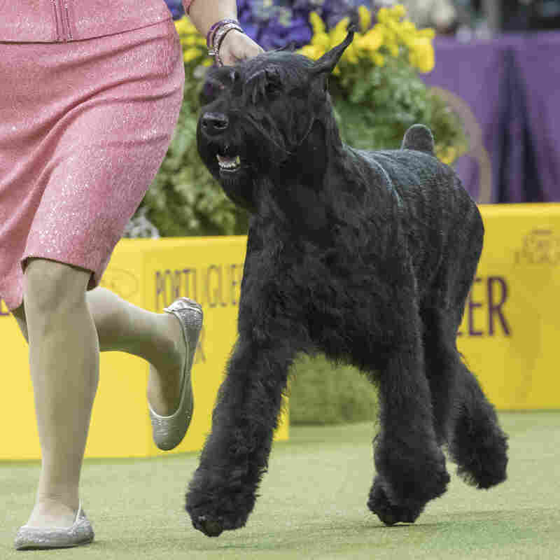 Truly best in show: Westminster victor  making Broadway debut