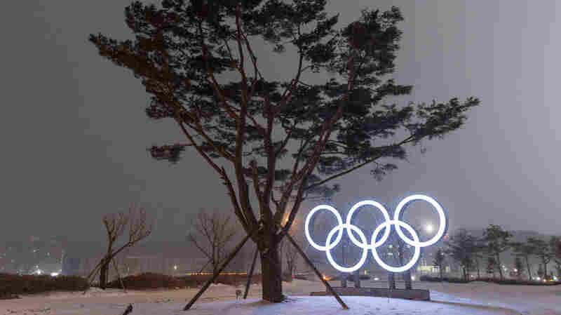 In Pyeongchang, Trees Get Help To Resist The Wind