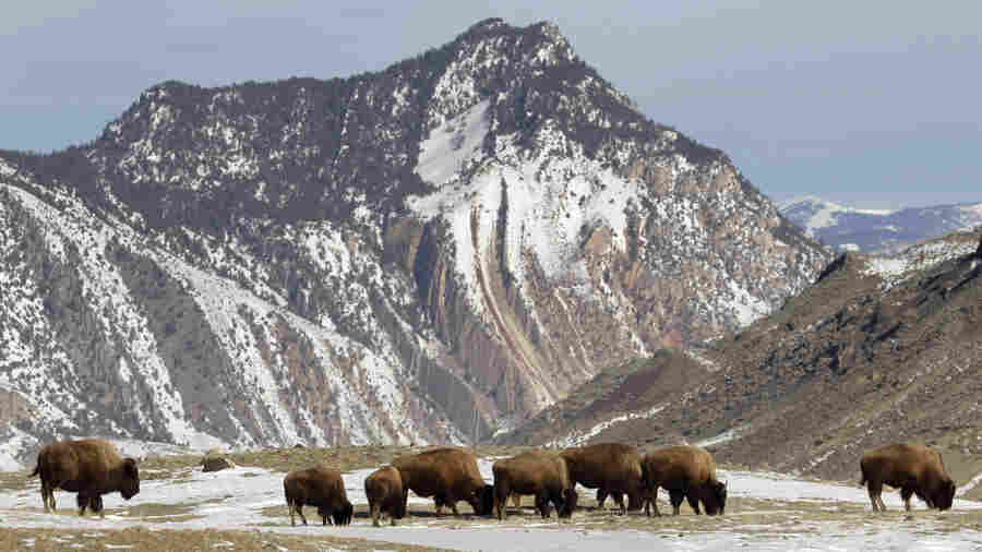 Search For Buried Treasure Linked To Illinois Man's Death At Yellowstone