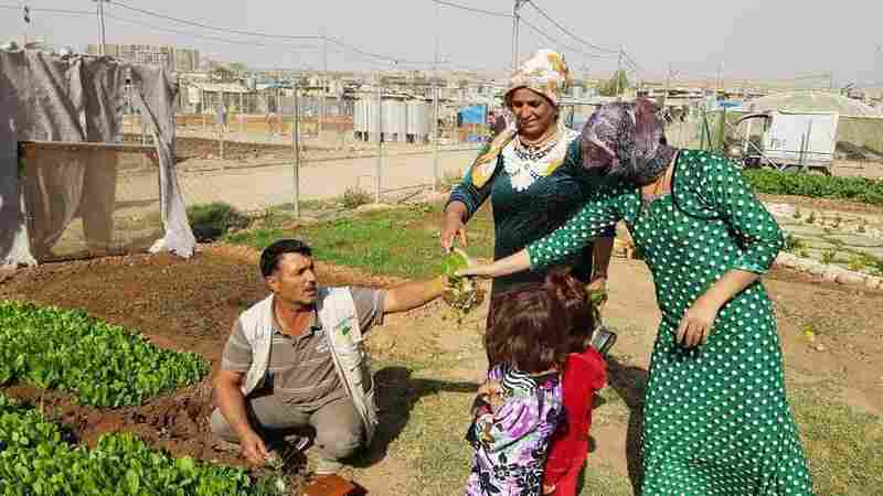 Community And Vegetables Grow Side-By-Side In Syrian Refugee Camp Gardens