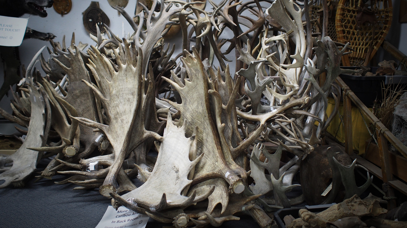 Boom In Antler Pet Chews May Have Opened A Black Market : NPR