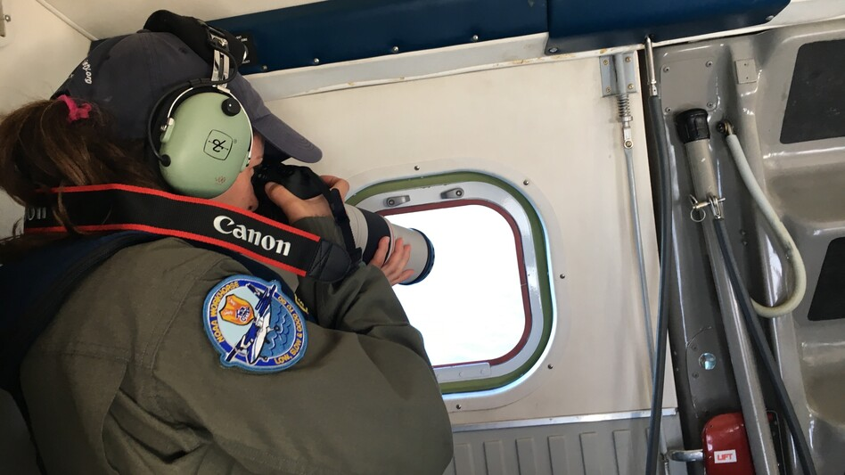 Melanie White takes photos of North Atlantic right whales from NOAA's Twin Otter as the plane circles the whales near Savannah. Whale observers and researchers use the photos to identify the whales. (Molly Samuel/WABE)