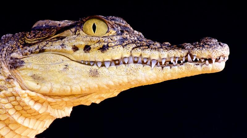 A New Book Explains How Mozambique's Crocodile Attack Problem