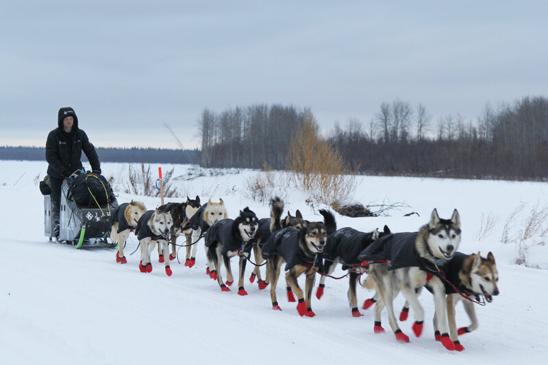 musher mutiny dog doping scandals mire the super bowl of sled dog
