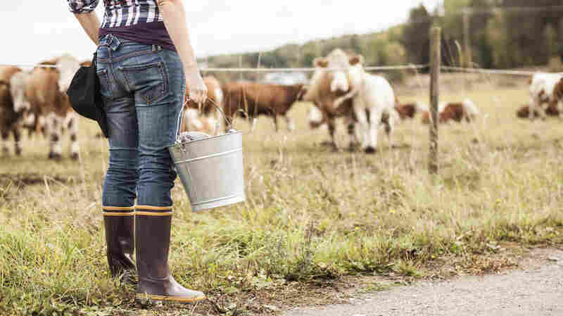 Mysteries of the Moo-crobiome: Could Tweaking Cow Gut Bugs Improve Beef?
