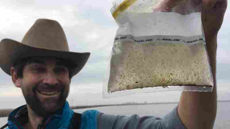 A 'Floating Fillet': Rice Farmers Grow Bugs To Replenish California's Salmon