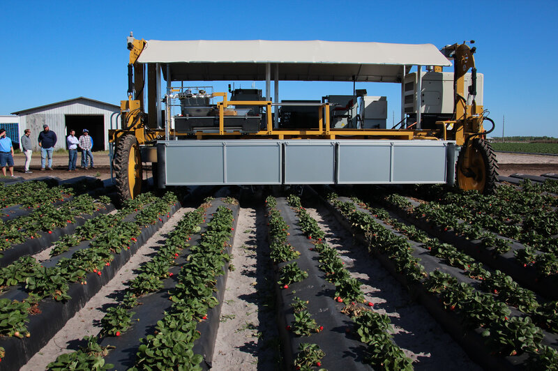 Robots Are Coming To Pick Your Berries  So Far, They're Not
