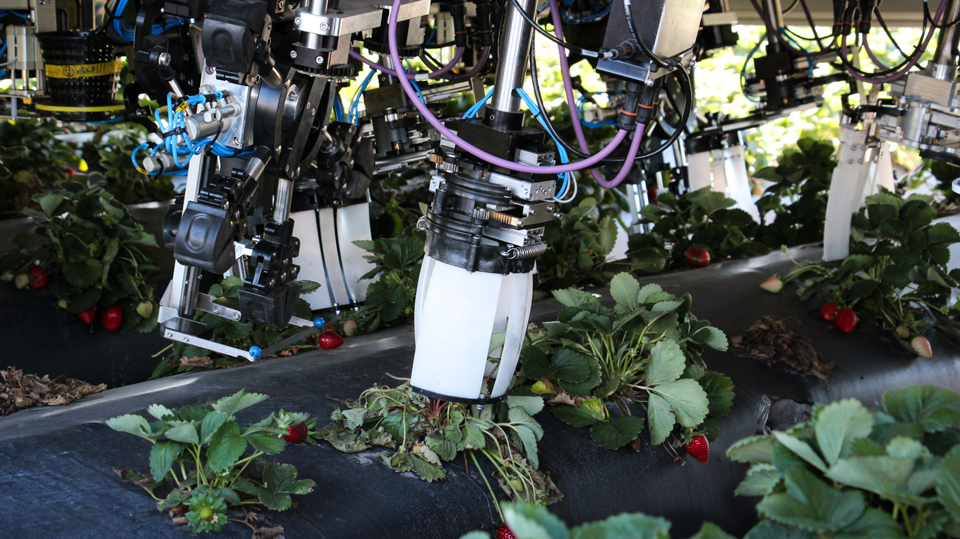 Robots Are Coming To Pick Your Berries  So Far, They're Not So Great
