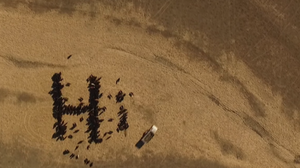 Have You Herd? Farmer Writes A Memoo Using Cows And Satellite Imagery