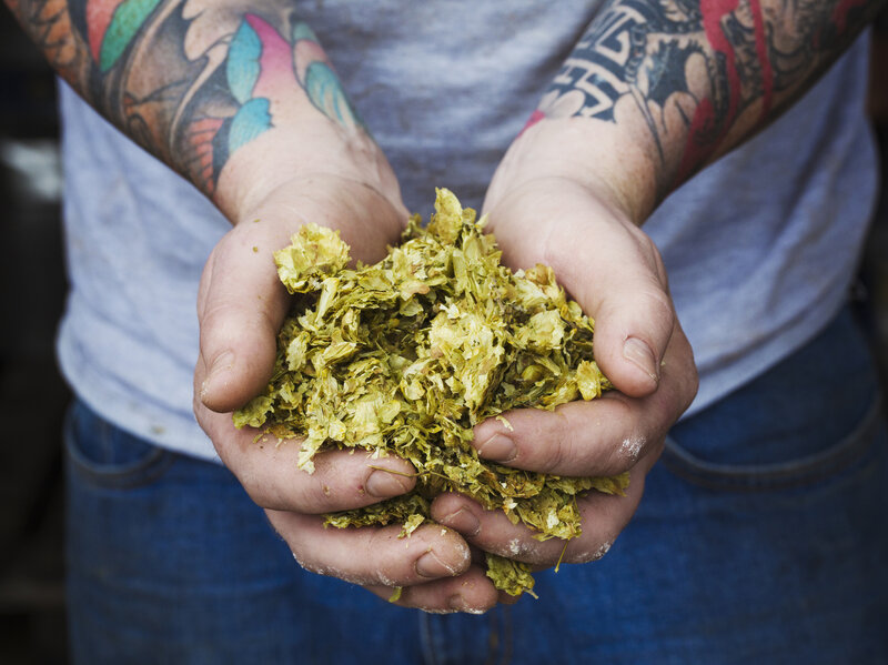 GMO Yeast Mimics Flavors Of Hops, But Will Craft Brewers