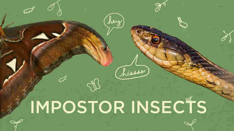 Video: Can You Find The Mimics In America's Largest Insect Collection?