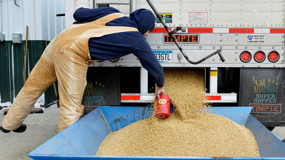China currently buys nearly a third of the U.S. soybean crop — but the country plans to impose tariffs, in response to a Trump administration plan. Here, a worker takes a sample from a truckload of soybeans in Fargo, N.D., last December. (Dan Koeck/Reuters)