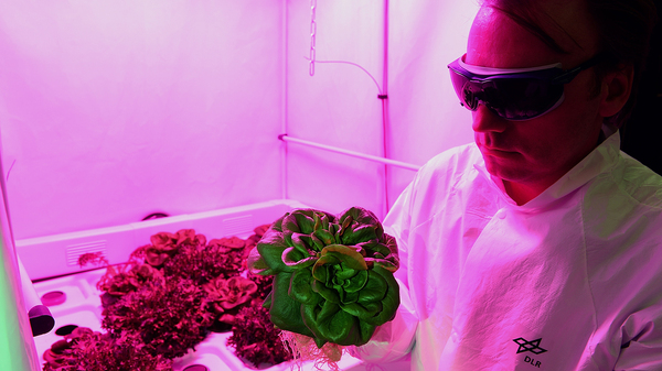 Engineer Daniel Schubert inspects lettuce at the German Aerospace Center in Bremen. Scientists there are developing greenhouses for a potential Mars colony. The first greenhouse is being tested in an inhospitable environment in the Antarctic.