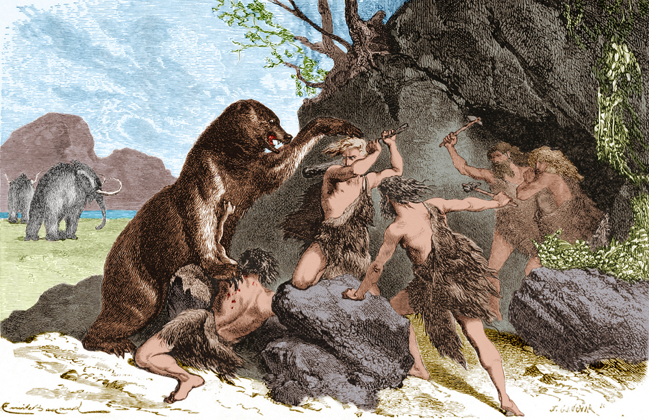 An illustration from 1870 shows Prehistoric men using wooden clubs and stone axe to fend off an attacks by a large cave bear. The cave bear (Ursus spelaeus) was a species of bear that lived in Europe during the Pleistocene and became extinct at the beginning of the Last Glacial Maximum, about 27,500 years ago. Mammoths can be seen in the background. (British Library/Science Source)