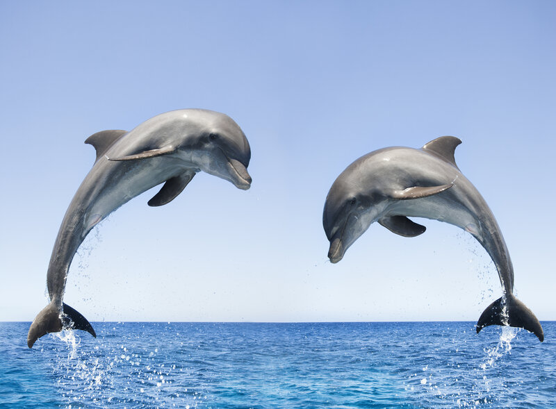 bottlenose dolphins spotted off canada s pacific coast for the first